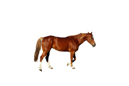 A isolated picture of a horse taken at a ranch in Indiana Stock Photo