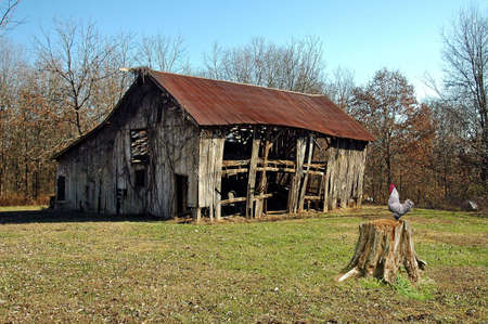 A picture of a old barn and rooster taken in Indiana