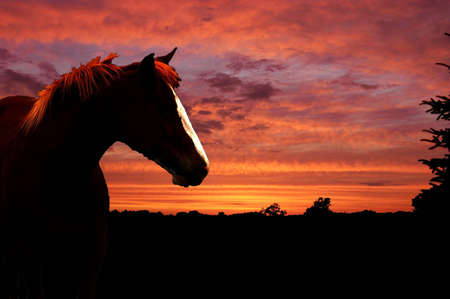 A  picture of a horse at sunset with the landscape shadowed in the background
