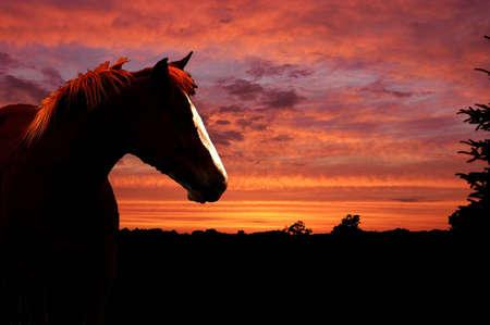 caballos negros: Una imagen de un caballo al atardecer con la sombra del paisaje en el fondo  Foto de archivo