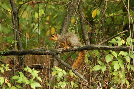 A picture of a squirrel on a limb