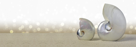 nautilus: Nautilus shells on sandy beach