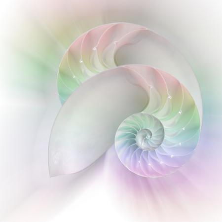 chambered: Chambered Nautilus cutaway Shells background