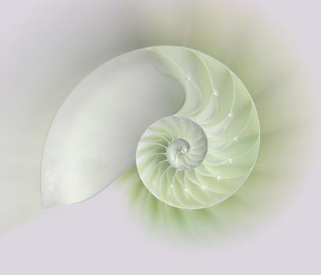 chambered: Chambered Nautilus cutaway Shells on colorful background