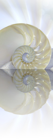 nautilus: Chambered Nautilus cutaway Shell on beach reflected in water