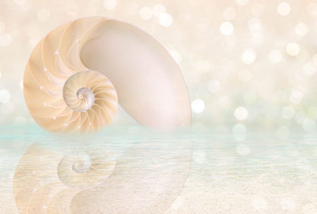 chambered: Chambered Nautilus cutaway Shell on beach reflected in water