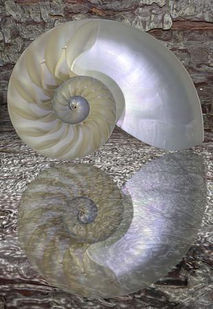 chambered: Chambered Nautilus cutaway Shell over tree bark background Stock Photo