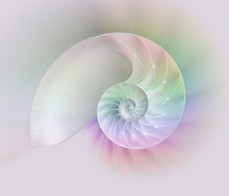 Chambered Nautilus cutaway Shells on colorful background