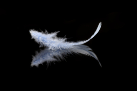 Abstract blurred blue feather over black background