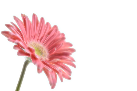 Artistic gerbera flower background