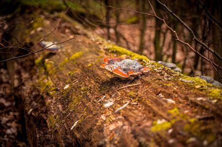 A tree mushroom.