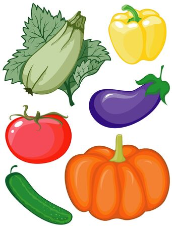 zapallo italiano: Conjunto de color y verduras �tiles sobre fondo blanco
