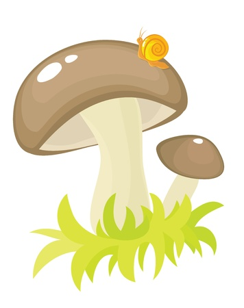 Mushroom with snail in a green grass