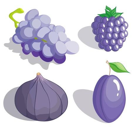 blackberry fruit: Set dark blue and lilac fruit