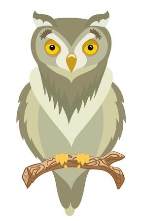 a large bird of prey: Intelligente e selvaggio marrone gufo si siede sul ramo