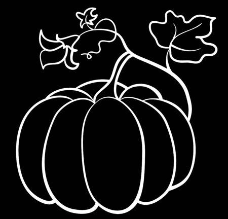 large pumpkin: pumpkin vegetable on black background