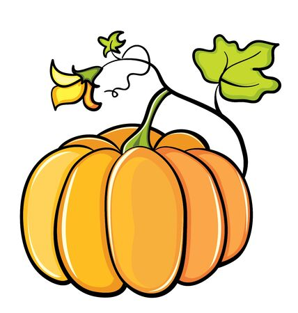 stocky: color pumpkin vegetable on white background