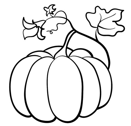 pumpkin vegetable on white background Illustration