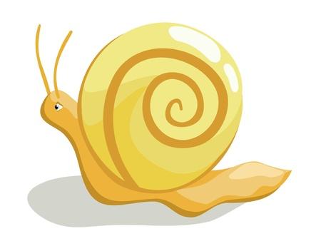 creeping: Beautiful creeping snail on white background Illustration