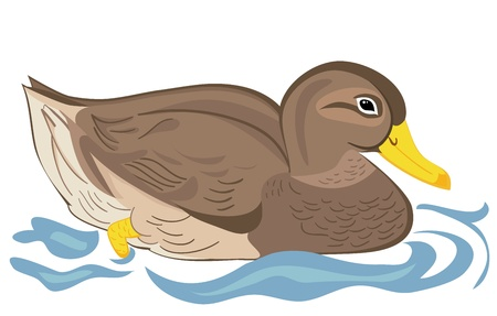 cartoon animal: Beautiful duck swimming in pond Illustration