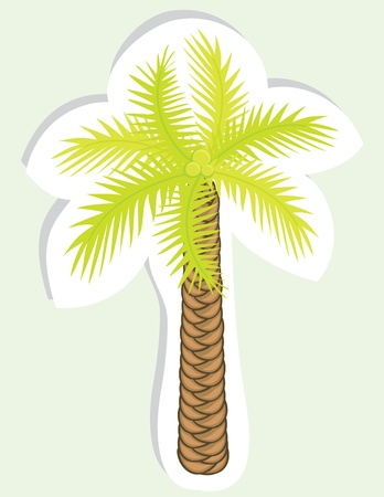 Vector color palm tree for your design  Sticker  Vector