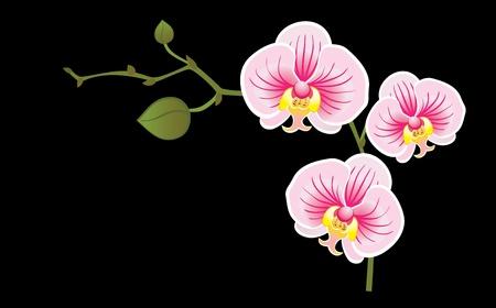 Bloeiende orchidee op een zwarte achtergrond Vector Illustratie