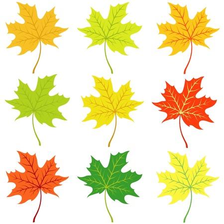 Autumn maple leaflets on a white background Illustration