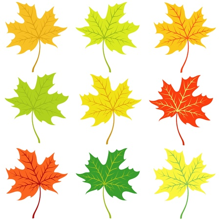 Autumn maple leaflets on a white background Illustration