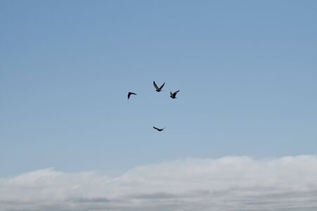 Four flying dove photo