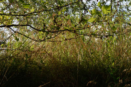 meadow  grass: prado de hierba