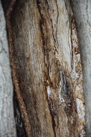diseased: trunk of tree crumbled and ill with mushroom medicate and cure