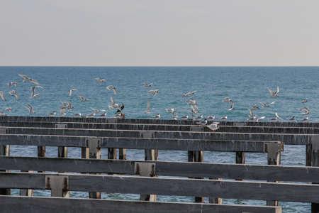 torres el�ctricas: pilones fondo del mar con gaviotas en vuelo