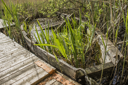 going nowhere: Abandoned sunken overgrown rowboat