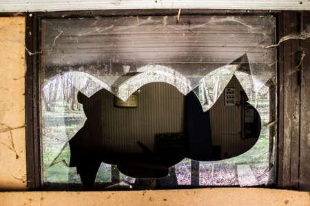 ventana rota: Ventana ara�a reflexiones forestales web rotos