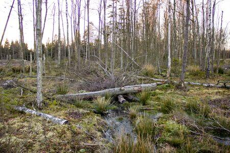 deforestacion: Cortar �rboles tragados por la naturaleza en una zona deforestaci�n.