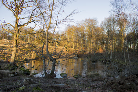 miry: A pond in a deforestation area just before sundown. Stock Photo