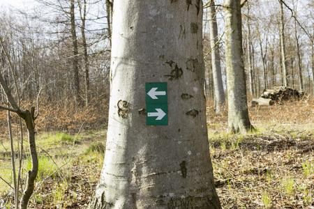 ambivalence: Connectez-vous avec les directions de randonn�e dans la for�t