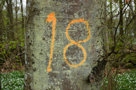 counted: Tree number eighteen has been chosen and marked.