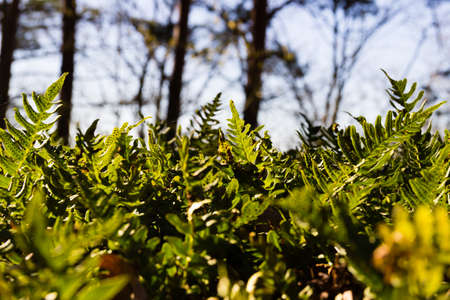Plants growing on a sunny spring day Reklamní fotografie