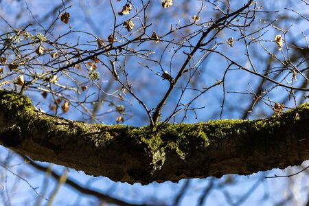 Branch with twigs in spring resembles a smile