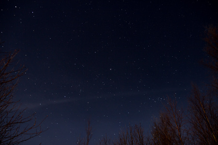 Sky full of stars seen from behind trees Stock Photo