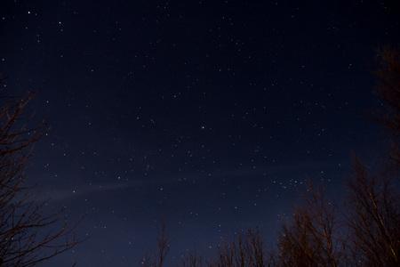 Sky full of stars seen from behind trees Reklamní fotografie