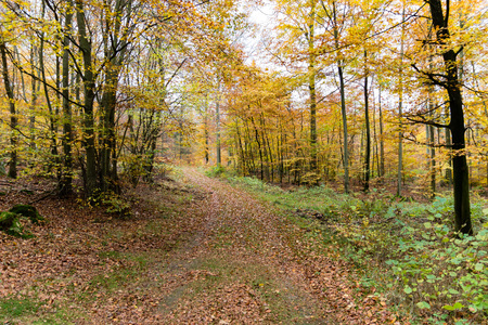 Dirtroad surrounded by autumn trees Stock Photo
