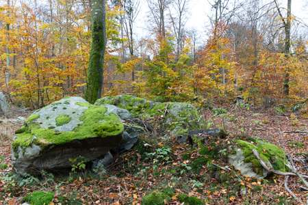 Green and yellow scenery in november Reklamní fotografie