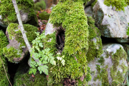 New life taking over in dead tree Reklamní fotografie