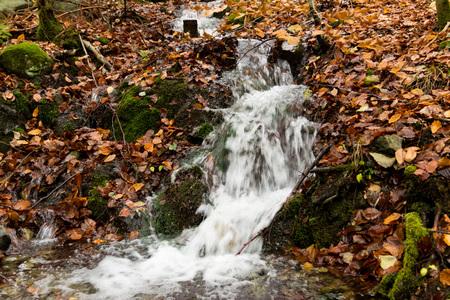 A stream and leaves in november Reklamní fotografie