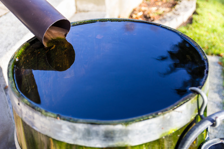 A barrel full of rainwater in a garden