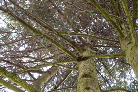 A squirrel sitting in a tree looking down