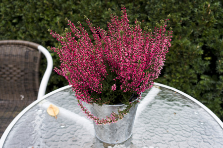 A bucket of heather on a table
