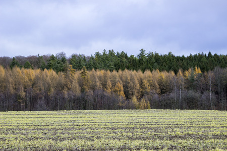 Layers of trees in a colorful composition